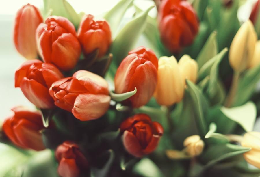 spedire fiori a domicilio